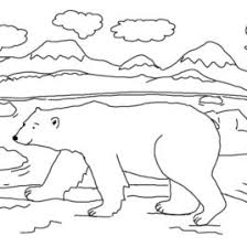 polar bear color page snow bear coloring page kids drawing and coloring pages marisa