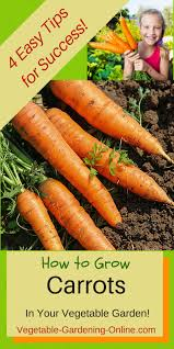 easy tips for growing carrots