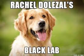 Black Lab Meme - he identifies as a black lab meme on imgur