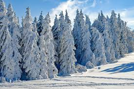 photos of snow snow images pixabay download free pictures
