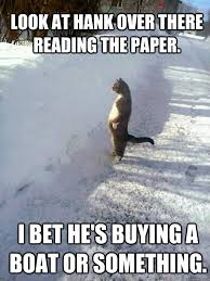 Newspaper Cat Meme - envious cat adviceanimals
