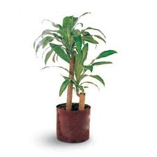 top house plants top indoor plants best air filters for homecorn plant top