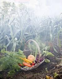 how to winterize a garden preparing garden for spring