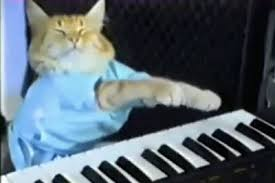 Cat Playing Piano Meme - beyond the meme internet cat celebrities 9thefix