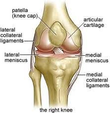 Collateral Ligaments Ankle Collateral Ligament Injury Sports Podiatry