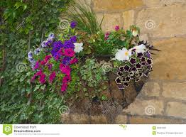 Garden Baskets Wall by Plants Superb Wall Plant Basket Colorful Plants In Wall Wall