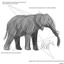 your elephant drawing guide four important core steps for drawing