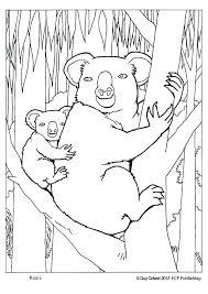 free printable koala coloring pages kids 25625
