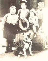 american pit bull terrier history some data to consider regarding the portugal u0027s mandatory