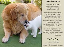 Poems Of Comfort For Loss 137 Best Rainbow Bridge Images On Pinterest Pet Loss Rainbow