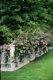 easy growing for fences southern living