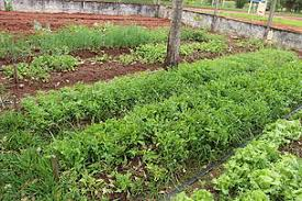 schools in campo grande create sustainable environments and