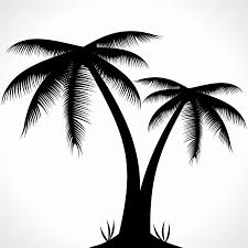 palm tree clipart line drawing pencil and in color palm tree