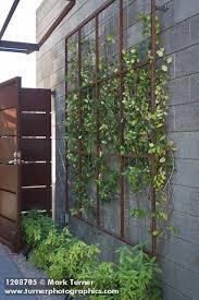 Trellis For Wisteria Best 25 Wall Trellis Ideas On Pinterest Trellis Diy Garden