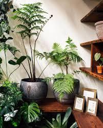 Best Fragrant Indoor Plants - best 25 indoor tree plants ideas on pinterest indoor trees
