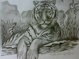 ferrocious feline u2013 tiger claw u2013 lion u2013 animal drawing forest