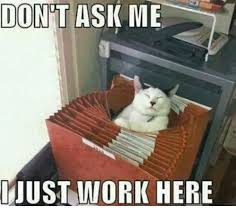 Working Cat Meme - 25 best memes about i just work here i just work here memes