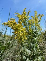 native plants fort myers in search of thomas edison u0027s botanical treasures science talk