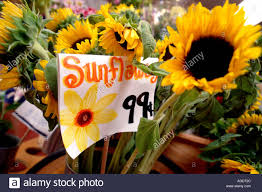 sunflowers for sale sunflowers sun flower flower yellow green leaves leaf sunflower