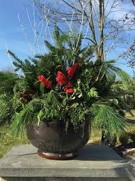 100 winter flowering shrubs for containers what to do with