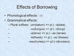 bureau plural indian loanwords in ppt