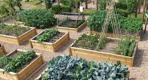 Kitchen Garden Designs Drink Your Garden U201d The Best Garden Center In Binghamton Ny And