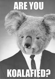 Koala Meme - business koala meme by f0r71fy memedroid