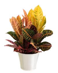 Modern Houseplants by Common House Plants Hgtv