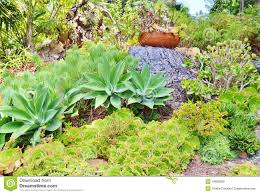 Different Types Of Garden - plant was lovely cactus filled many different types plants was
