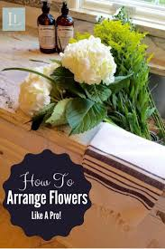 81 best happy house plants images on pinterest indoor plants