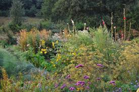 native plants uk noel u0027s garden blog telling the story of uk naturalistic planting