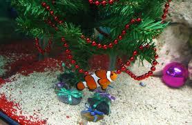 fish aquarium decorate ideas wishforpets