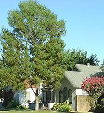 3 Bedroom Houses For Rent In Bakersfield Ca by Bakersfield California Homes For Sale Houses For Sale In Bakersfield
