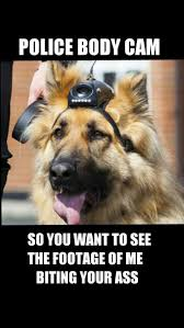 330 best german shepherds images on pinterest dogs funny german