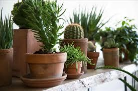 tall succulent house plants darxxidecom