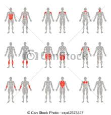 Human Body Muscles Images Clipart Vector Of Human Body Muscles Human Muscles Silhouettes
