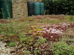 is a sedum roof covering best for a diy green roof