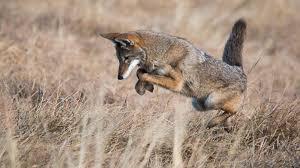 Arizona wildlife images Inside the arizona highways wildlife guide azpm jpg