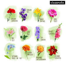 flower of the month classmate on find your birth month and comment with the