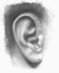 11 best draw portait ear images on pinterest drawing drawing