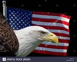 Bald Eagle And American Flag Composite Image Of Two United States Symbols The American Flag And