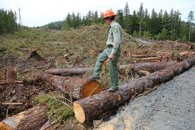 Alaska Forest images In alaska a battle to keep trees or an industry standing the jpg