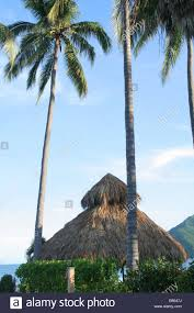 Mexican Thatch Roofing by A Thatched Roof Tropical Grass Hut Or Palapa In Mexico Stock Photo