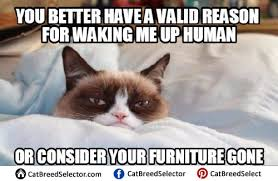 angry cat no meme funny cute angry grumpy cats memes pinterest