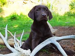 When Do Deer Shed Their Antlers by Trained Shed Antler Hunting Dogs