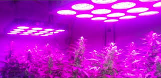 cheap grow lights for weed growing marijuana under led lights spectrum and wavelength toke