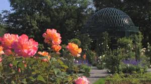 the peggy rockefeller rose garden youtube