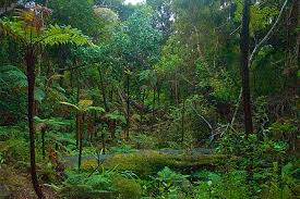 Plants In The Tropical Rain Forest - biotic factors of the tropical rainforest biology dictionary