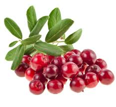 thanksgiving cranberry dental pros and cons of cranberries this thanksgiving ankeny ia