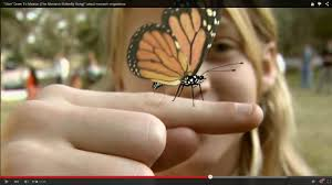 goin u0027 down to mexico the monarch butterfly song